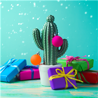 Christmas Cactus Fragrance Oil 939